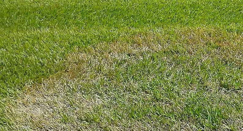 Masalah Rumput Paling Umum Yang Sering Terjadi
